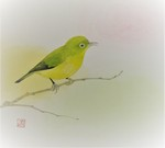 「japanese white-eye」
