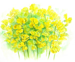 「Yellow sweet pea」