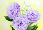 「Lilac Turkish bellflower」