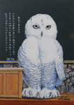 「Owl teacher」