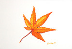 「Maple leaf(1)」