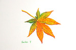 「Maple leaf(2)」