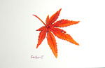 「Maple leaf(3)」