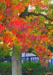 Autumn Tree in the city (1/5)