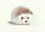 「Hedgehog」