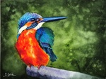 「Kingfisher」